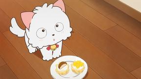 タマ誘拐される/おったま毛/猫カフェ・ヴァイオレット